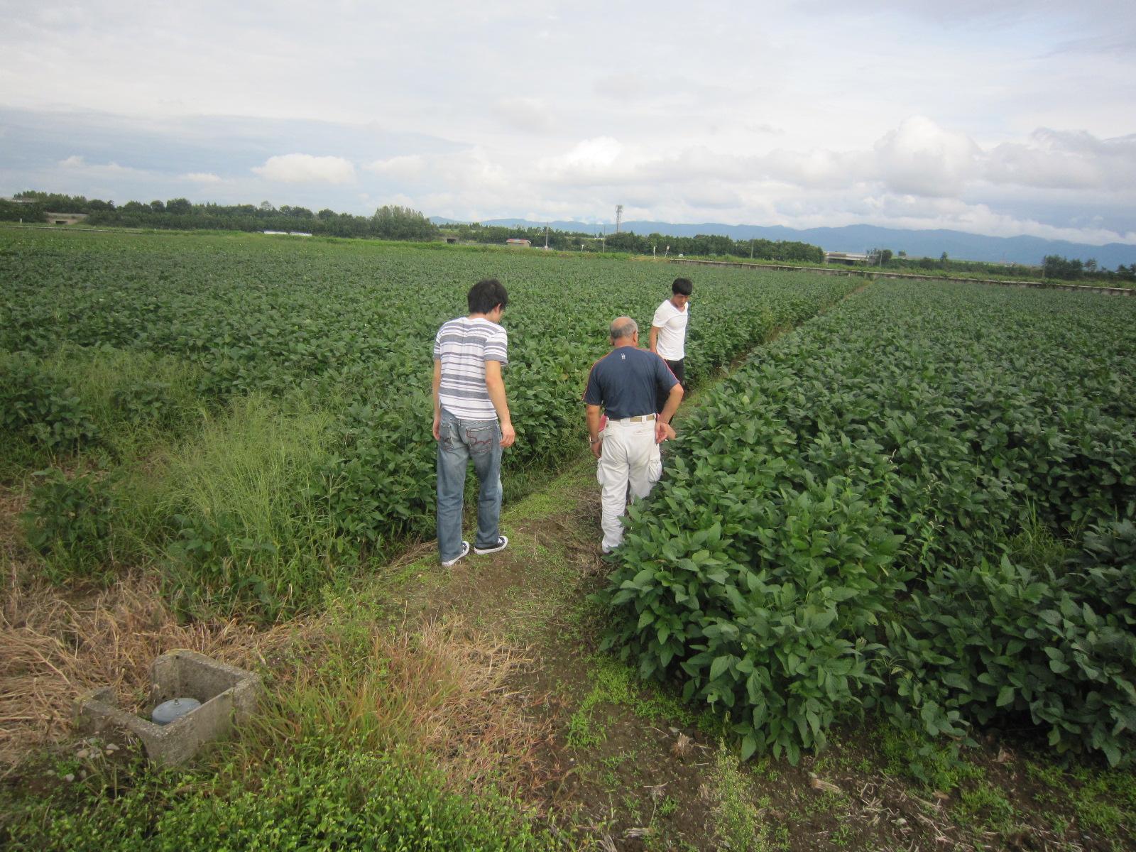 枝豆 農家 ブログ